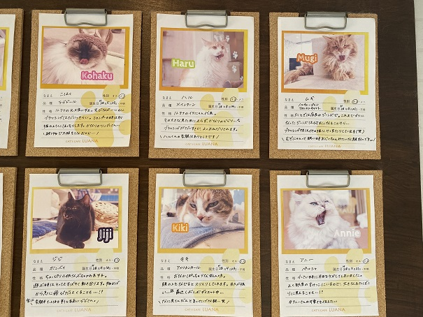 猫カフェルアナ 猫紹介2