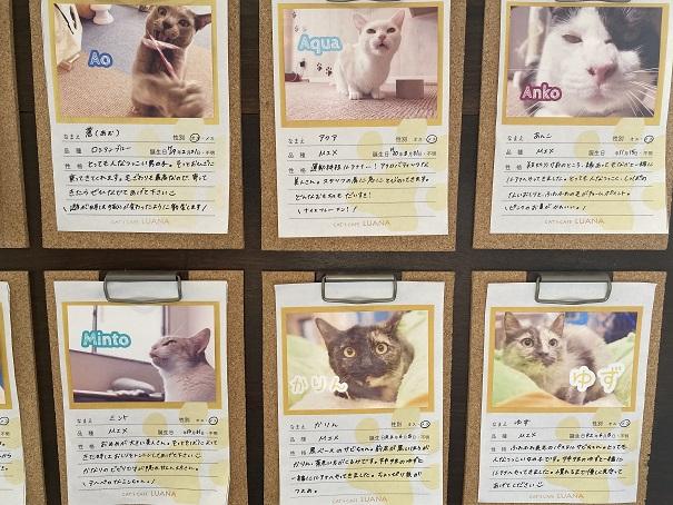 猫カフェルアナ 猫紹介3