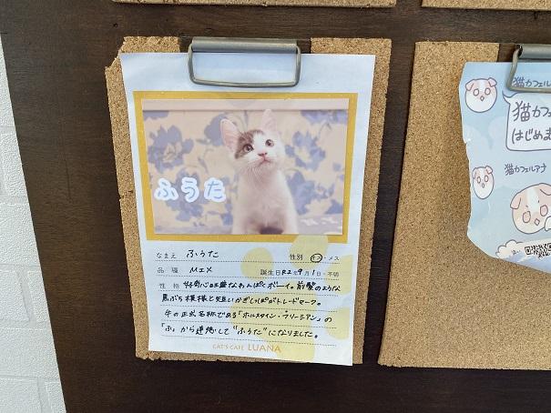 猫カフェルアナ 猫紹介5