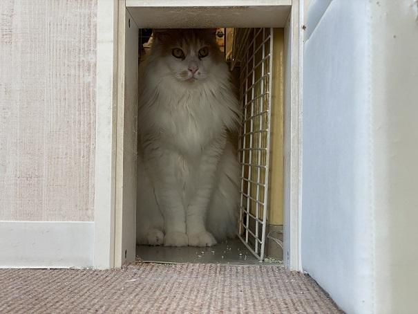 猫カフェルアナ スタッフ入口内