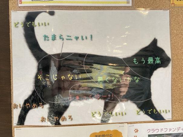 猫カフェルアナ 猫の気持ちいいところ