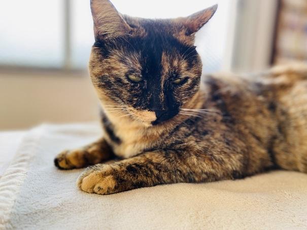 猫カフェルアナ 11