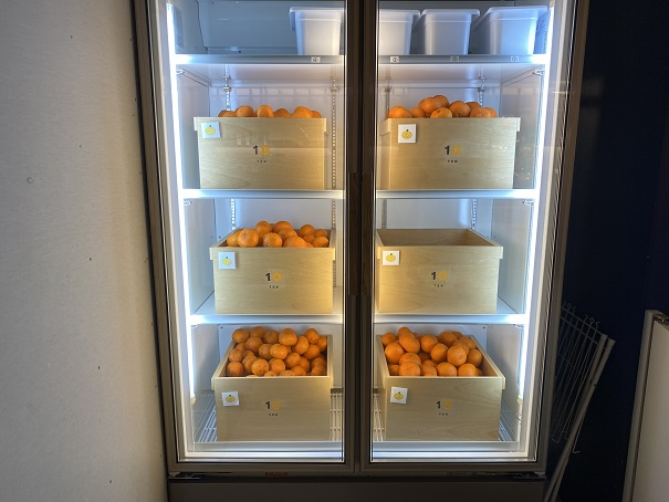 10FACTORY 冷蔵庫のみかん