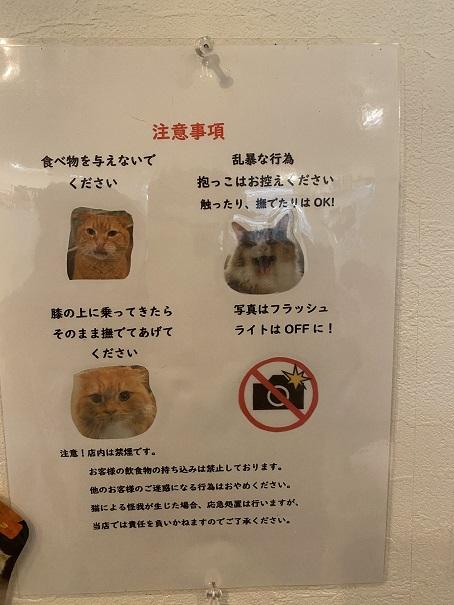 猫カフェRONRON 注意事項