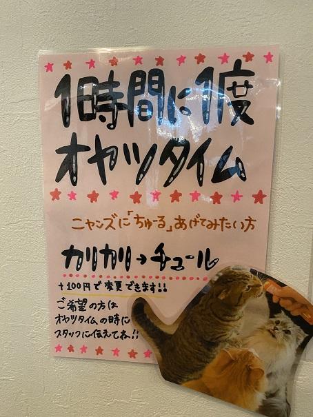 猫カフェRONRON おやつタイム