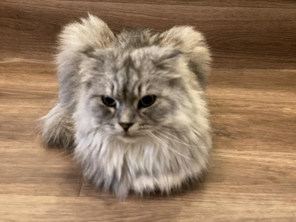 猫カフェRONRON シェラトン