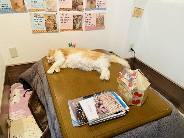 猫カフェRONRON ネネット