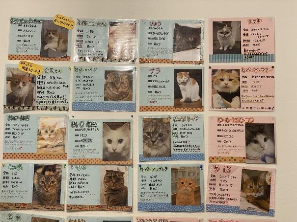 猫カフェRONRON 猫スタッフ1