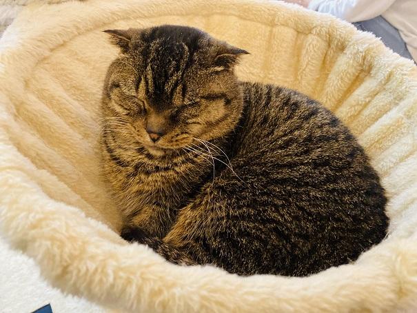 猫カフェRONRON マンチカン