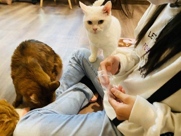 猫カフェRONRON オヤツタイム3