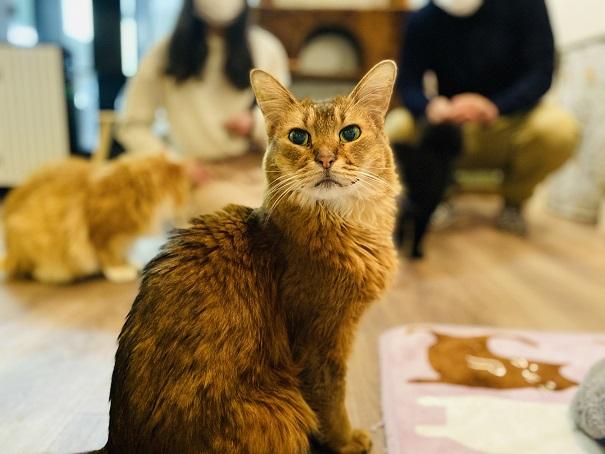 猫カフェRONRON うにちゃん