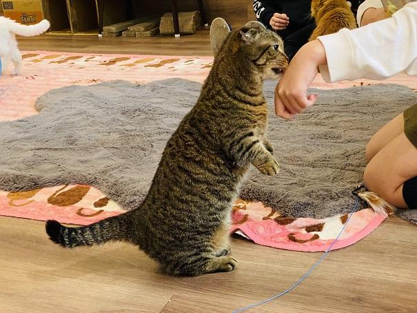 猫カフェRONRON モカ