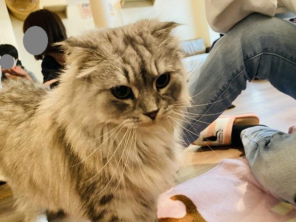 猫カフェRONRON シェラトン2
