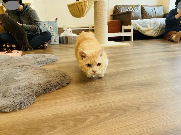 猫カフェRONRON カール
