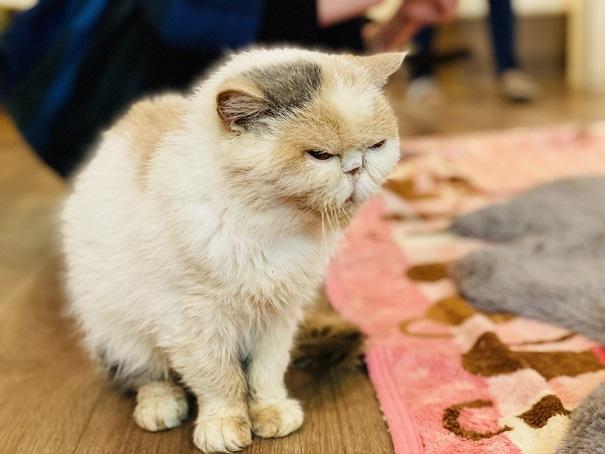 猫カフェRONRON スマキちゃん2