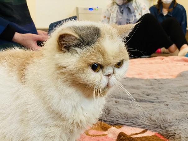 猫カフェRONRON スマキちゃん1