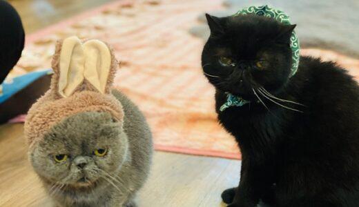 猫カフェRONRON 大街道商店街で猫に癒される 松山市