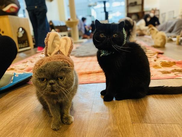 猫カフェRONRON りゅう・イヴ