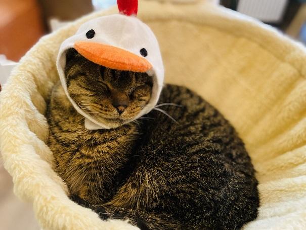 猫カフェRONRON モカかぶりもの