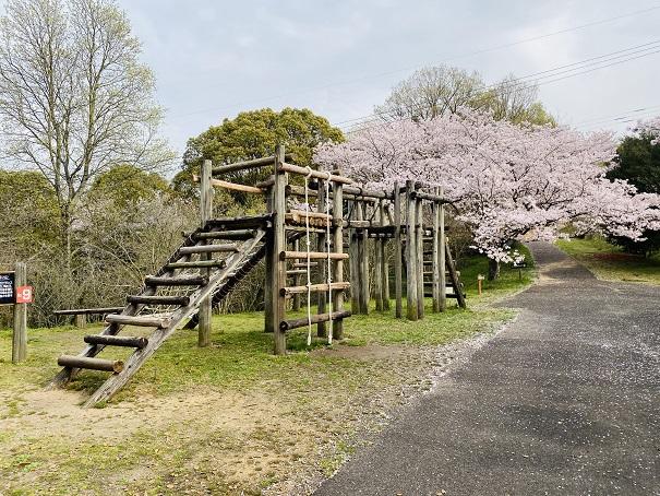 アスレチック桜