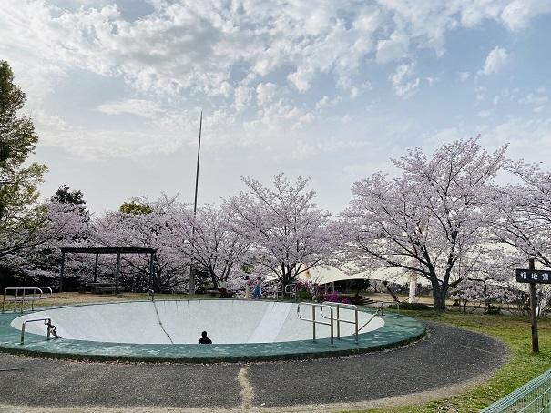 アリジゴク付近の桜