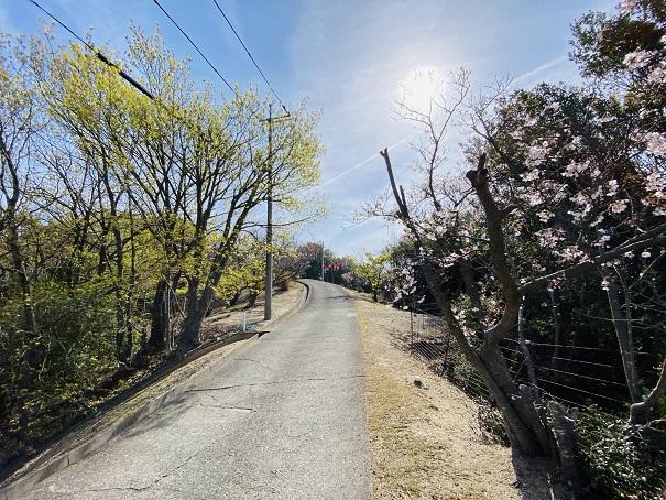 城山桜公園 さらに進む道