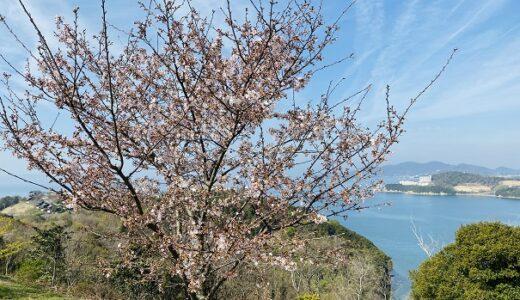 城山桜公園 小豆島の桜の花見スポット 映画 ドラマのロケ地