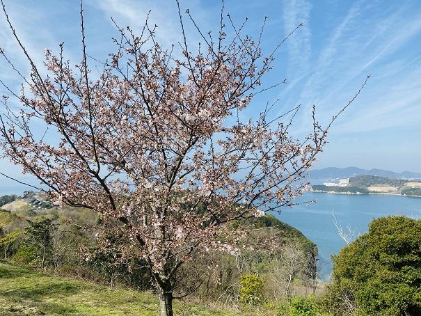 城山桜公園