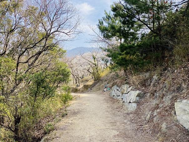 城山桜公園 ロケ地へ