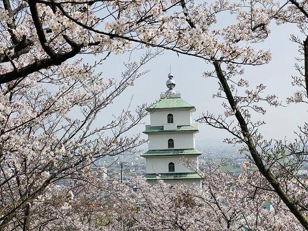 桃陵公園 出合いの広場桜3