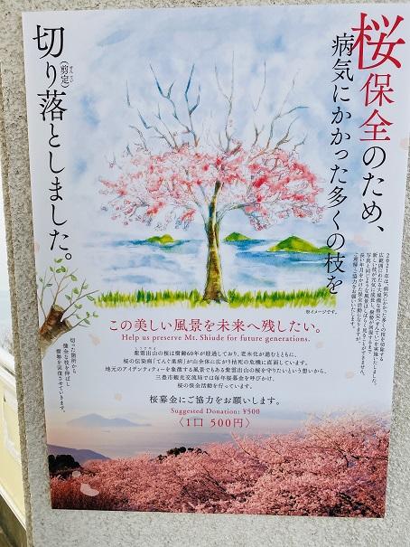 紫雲出山桜保全剪定