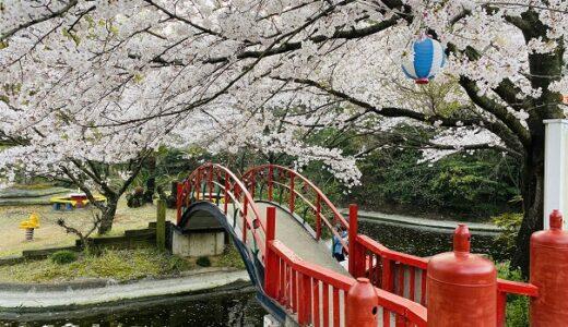 朝日山森林公園 桜 香川県で一番キレイな花見の名所 三豊市