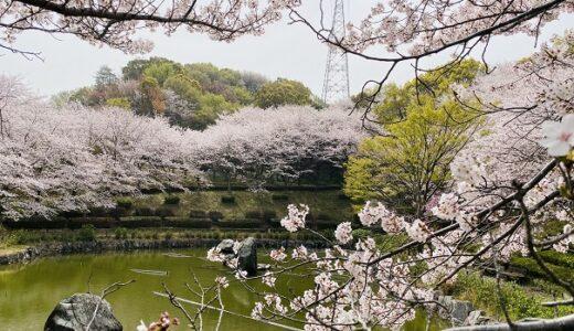丸亀市飯山総合運動公園と1000本の桜の花見 バーベキュー