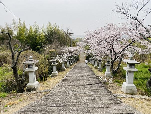 竜桜公園 参道