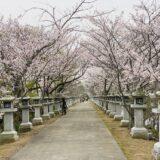 竜桜公園 龍満池に伸びる桜のトンネルと石灯篭 花見 高松市