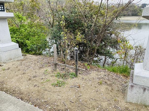 竜桜公園 桜苗2