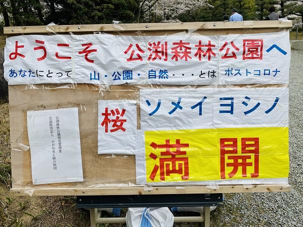 公渕森林公園 2021年桜満開