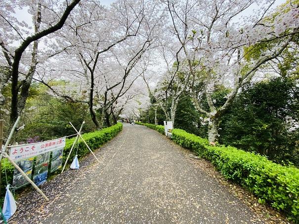 公渕森林公園 桜のトンネル入口