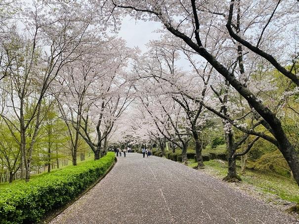 公渕森林公園 桜の花見