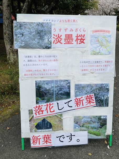 公渕森林公園 薄墨桜案内