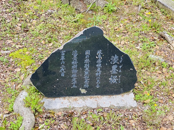 公渕森林公園 淡墨桜石碑