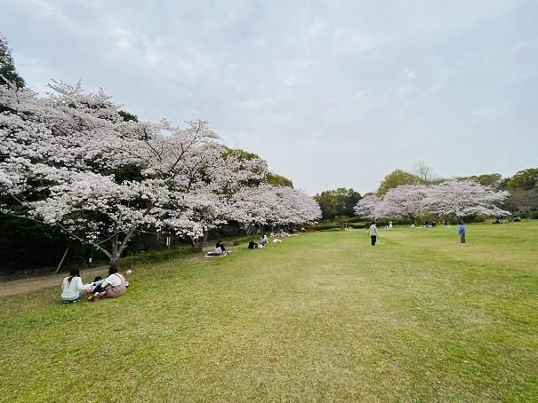 公渕森林公園 芝生広場