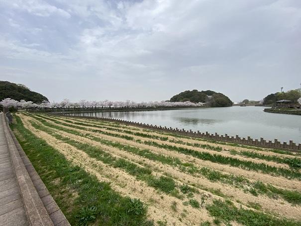 県立亀鶴公園 花しょうぶの里