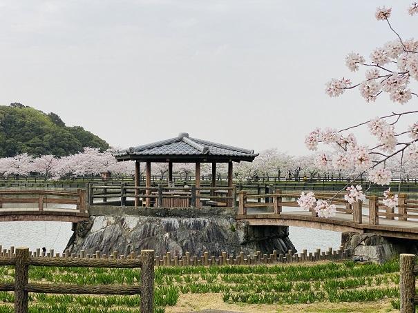 県立亀鶴公園 花しょうぶの中の休憩所