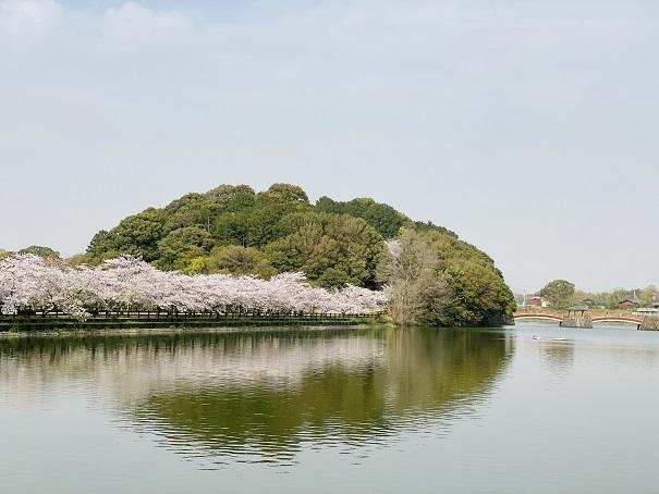 亀鶴公園 桜並木外から