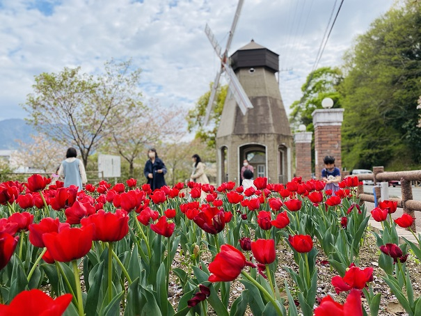 デ・レイケ公園チューリップと風車2