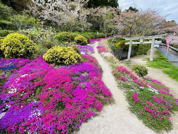 広棚花の里 芝桜と鳥居