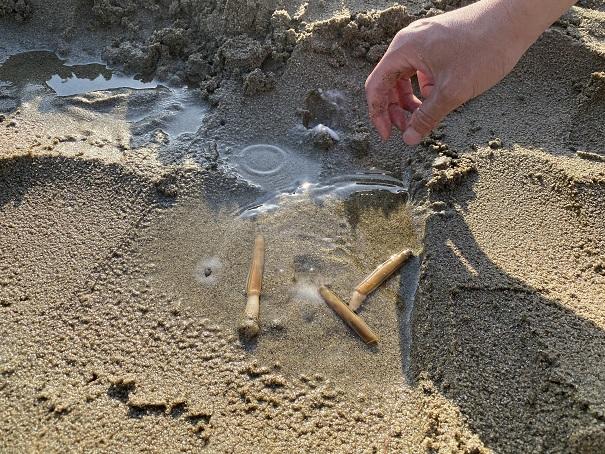 有明浜海水浴場のマテ貝