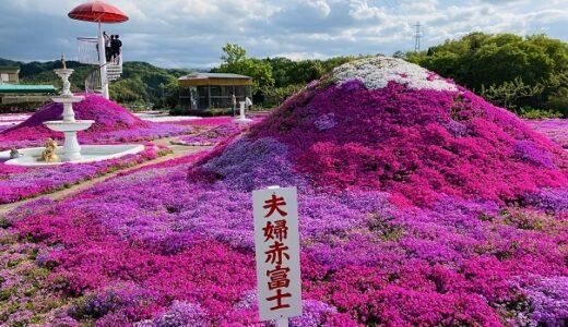 カフェジャルダン 25万株の芝桜 毎年変わるアート 高松市
