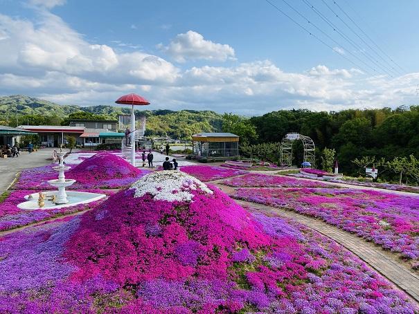 カフェジャルダン25万株の芝桜
